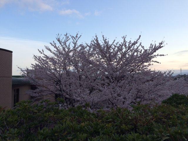 風景_20150403桜